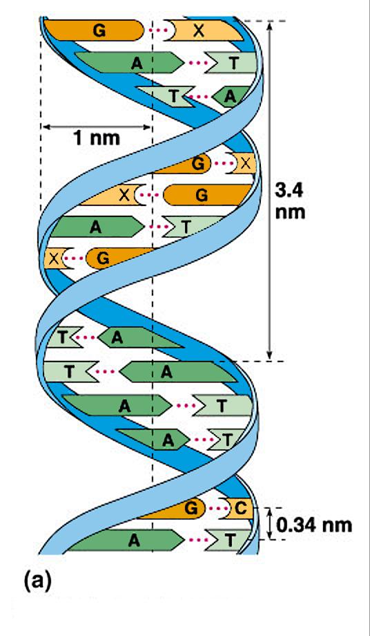 xet nghiem gen